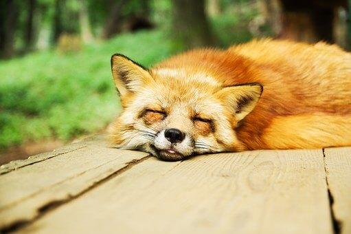 勉強中に眠くなる悩みの13の対策法 学習中の眠気にさようなら